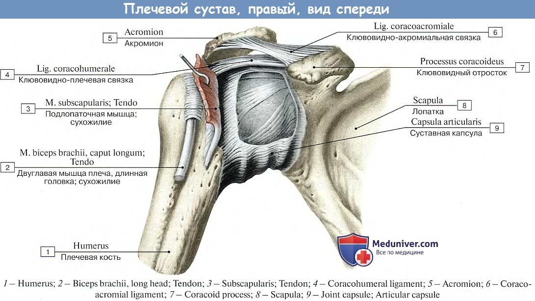 полезный домашнее лечение боли плеча мне